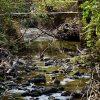 Blunn Creek Sm